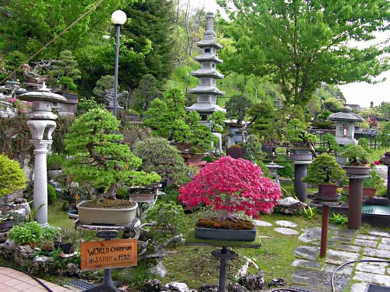 L\u0027entrata del Giardino Museo Bonsai della Serenità.