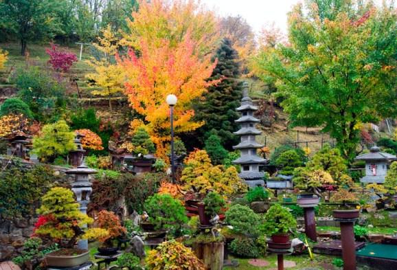 sei-wan-bonsai.en