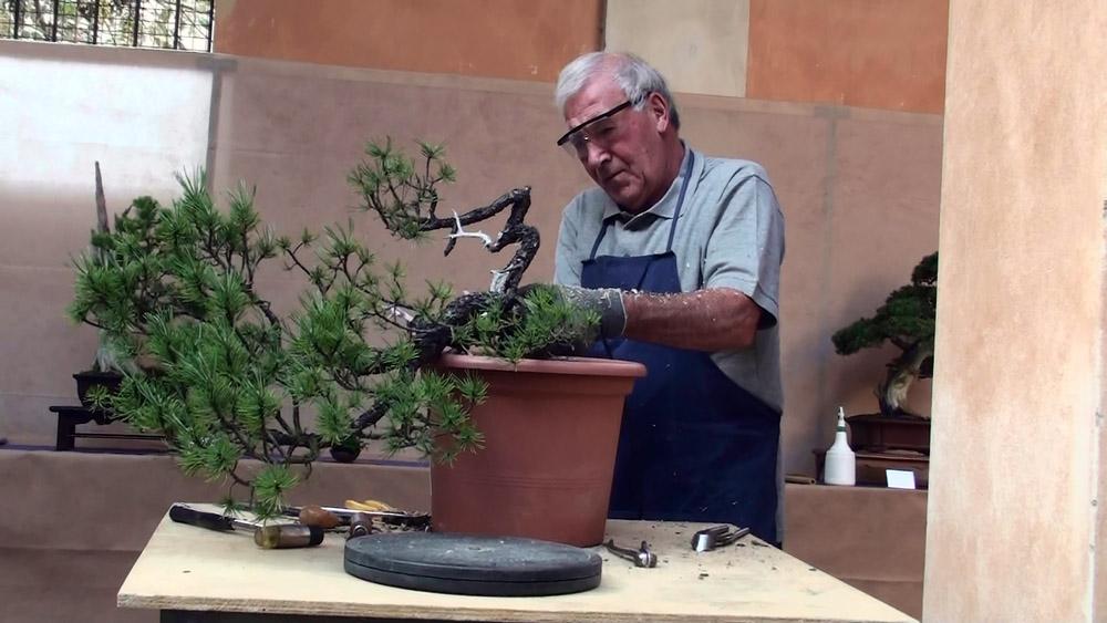 2014 demo alla Giareda del pino mugo (1)