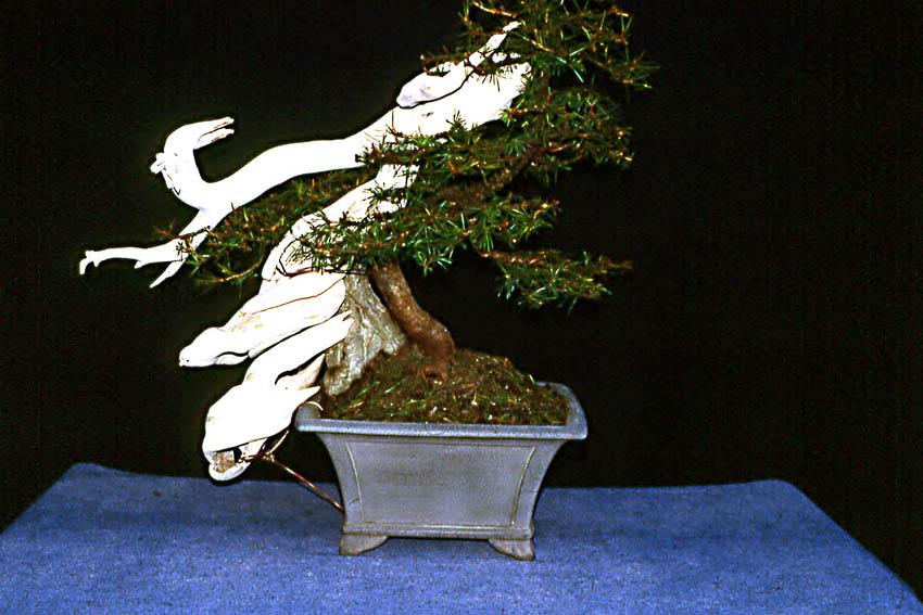 Larice inshogataishi Tanuki in evoluzione (5)