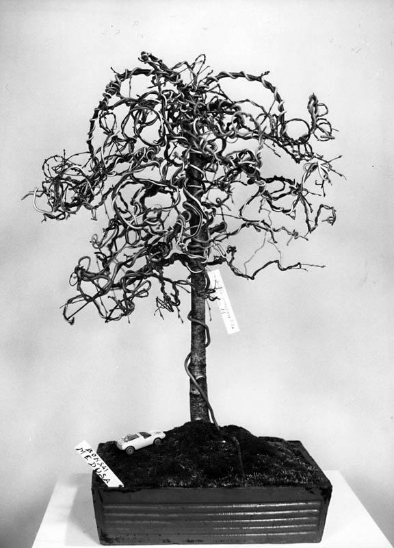 Foto 2,Betulla Medusa