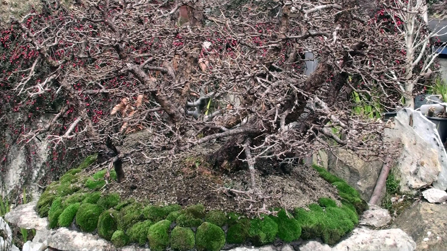 rinvaso-bosco-di-larici-marzo-2015-100
