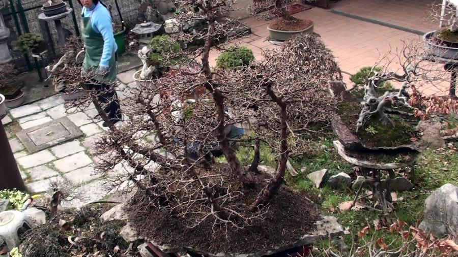 rinvaso-bosco-di-larici-marzo-2015-83