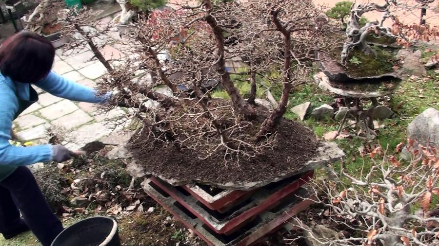 rinvaso-bosco-di-larici-marzo-2015-86