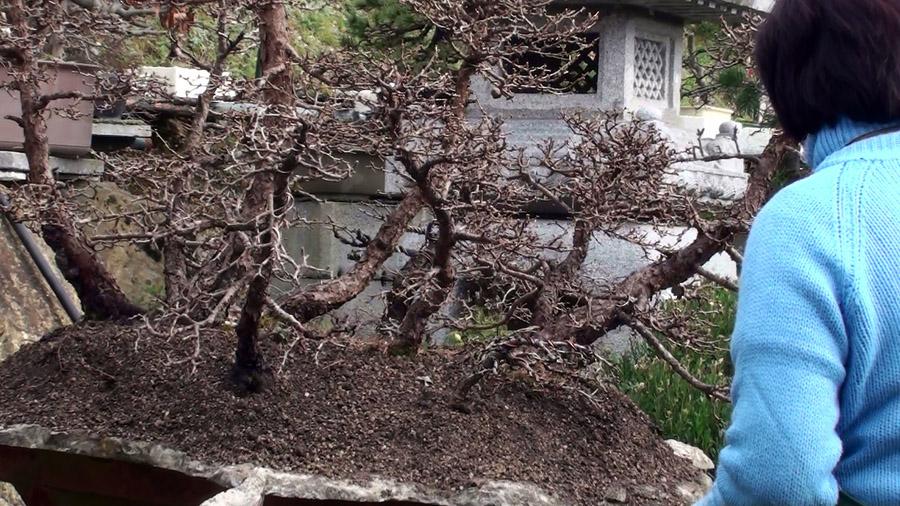 rinvaso-bosco-di-larici-marzo-2015-92