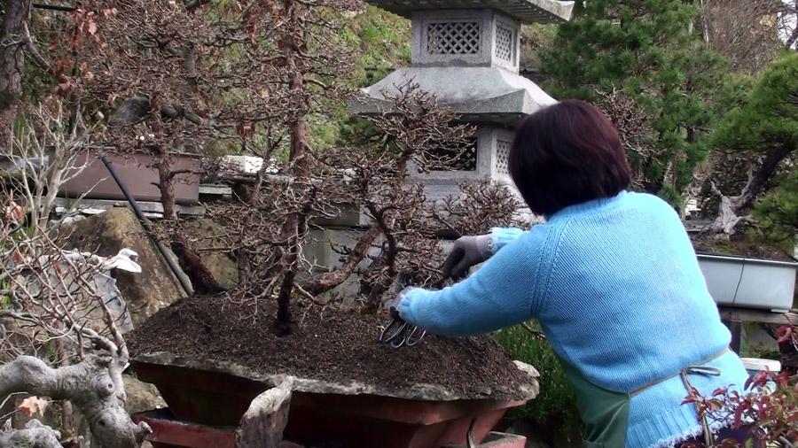rinvaso-bosco-di-larici-marzo-2015-93