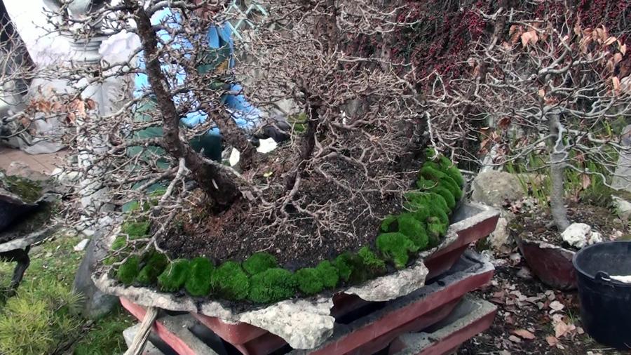 rinvaso-bosco-di-larici-marzo-2015-96