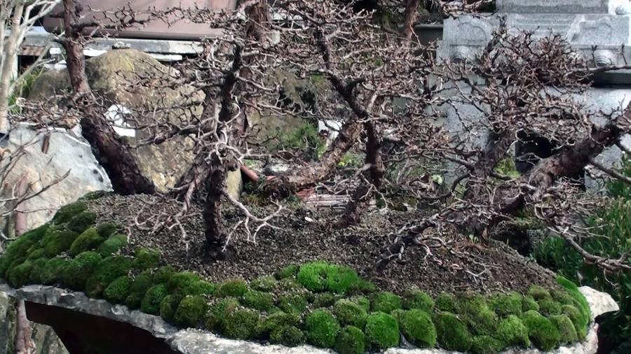 rinvaso-bosco-di-larici-marzo-2015-97