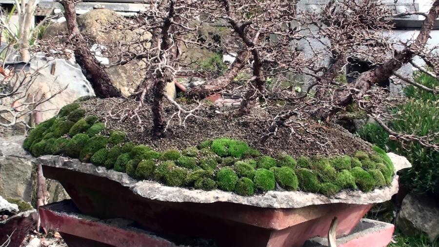 rinvaso-bosco-di-larici-marzo-2015-98