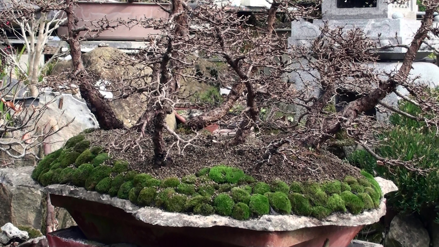 rinvaso-bosco-di-larici-marzo-2015-99