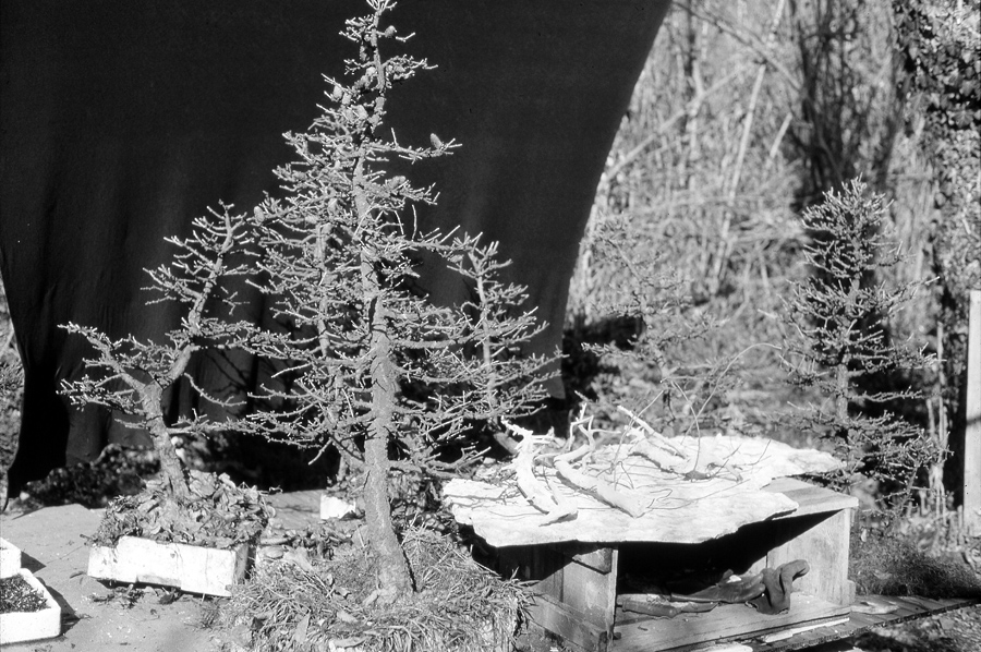 foto-1-inizio-forestina-nel-1975