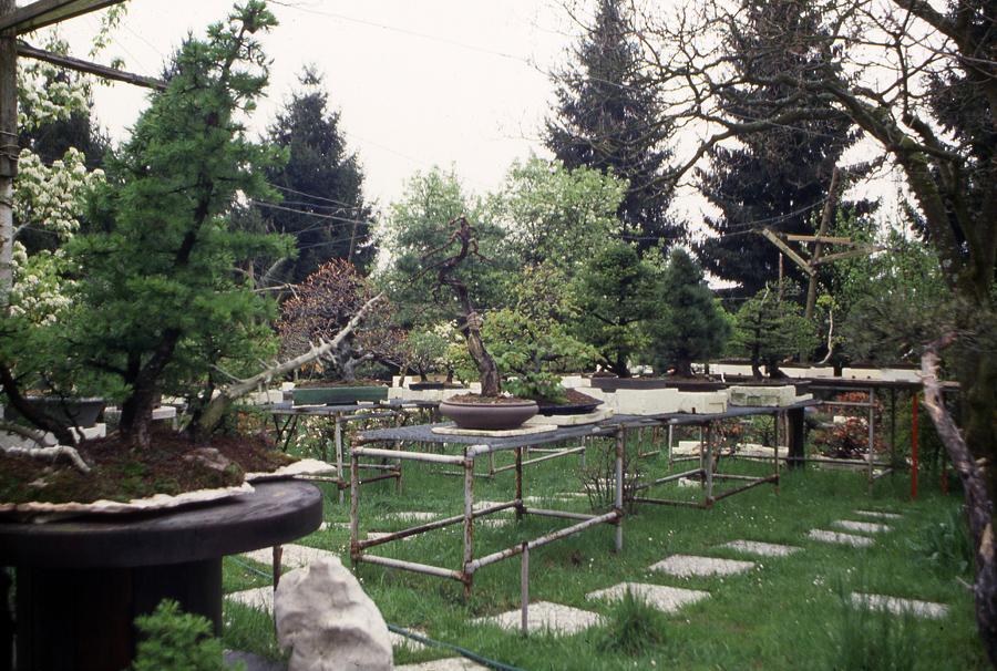foto-12-aprile-1993-la-forestina-ancora-a-belluno