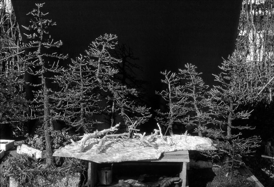 foto-2-del-1975-con-gli-elementi-per-la-forestina