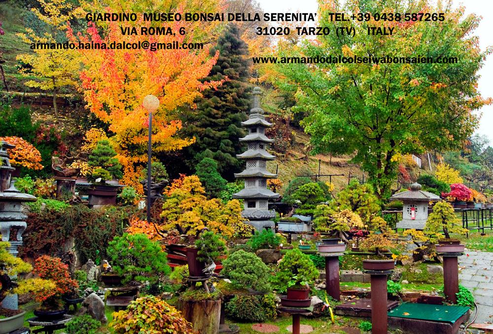foto-22-il-sei-wa-bonsai-en-visto-nel-2010