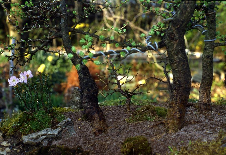 foto-5-aprile-1983-la-forestina-si-e-consolidata