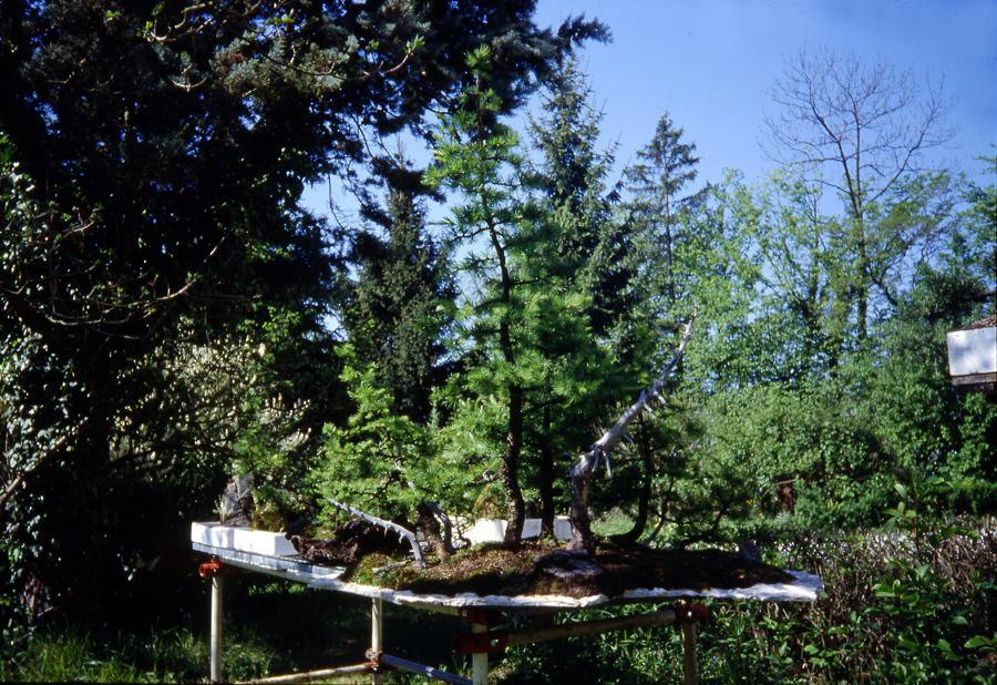 foto-6-maggio-1986-aggiunti-tronchi-morti