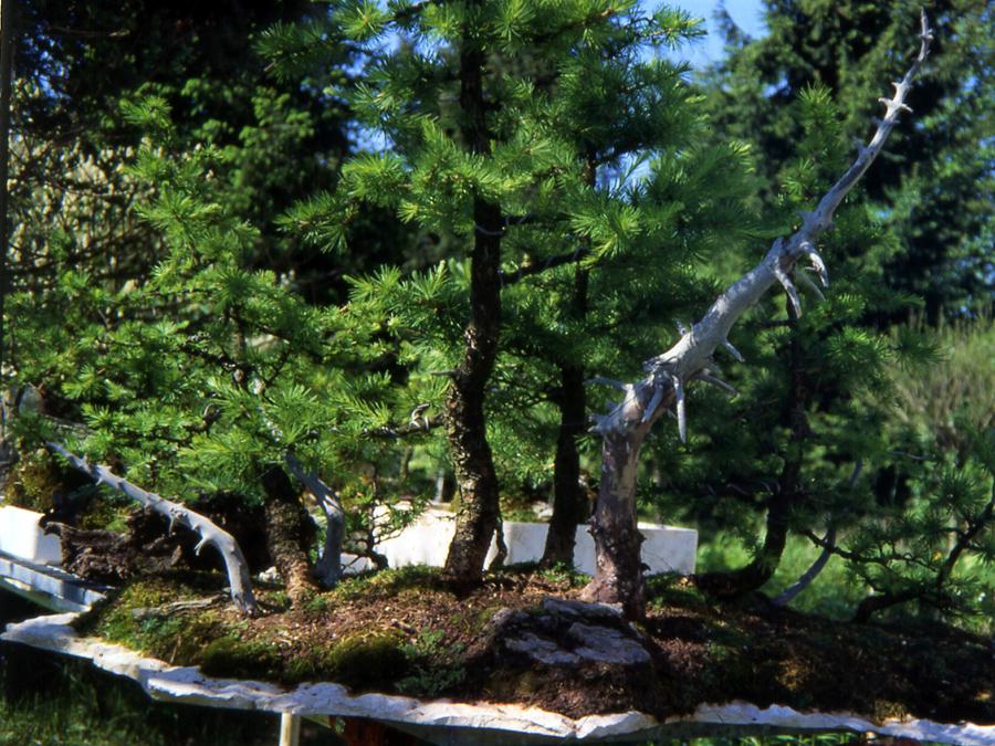 foto-9-la-forestina-nel-1989-dopo-la-pulitura-del-paesaggio